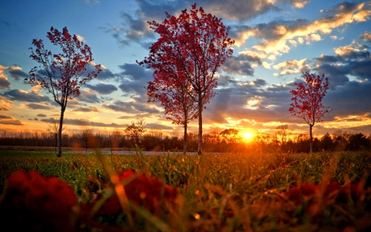 6928075-red-autumn-sunset
