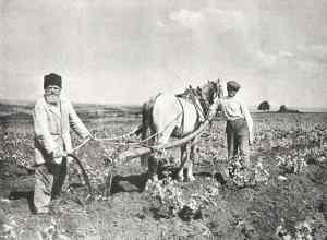 plowing_Israel